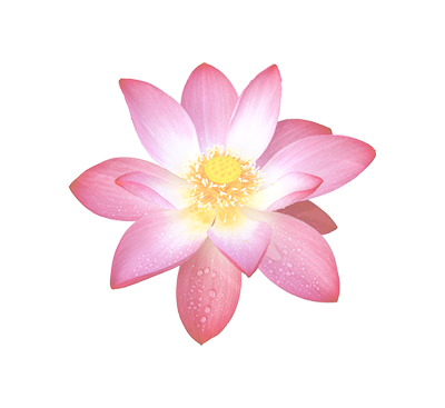 lotus_flower_2-mini