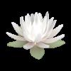 lotus_flower_mini